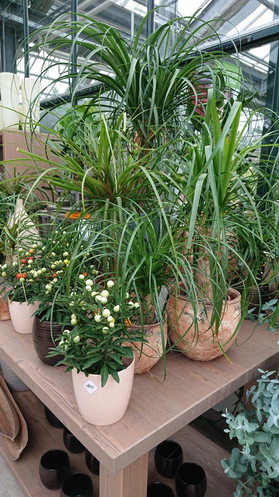 Grün- und Blühpflanzen